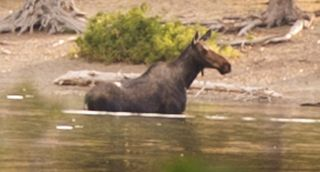Moose Two Medicine Glacier